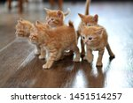 Stock photo the little red kitten plays on the floor looking directly at us horizontal photo beige and orange 1451514257