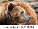 ursus arctos | Shutterstock . vector #145170289