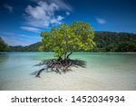 Mangrove Trees Grow Alone On...