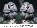 Stock photo two chimpanzees have a fun 145207369