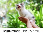 Stock photo beautiful kitten on the palm asian woman is stroking a small kitten 1452224741