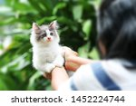 Stock photo beautiful kitten on the palm asian woman is stroking a small kitten 1452224744