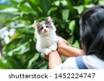Stock photo beautiful kitten on the palm asian woman is stroking a small kitten 1452224747