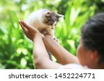 Stock photo beautiful kitten on the palm asian woman is stroking a small kitten 1452224771