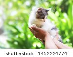 Stock photo beautiful kitten on the palm asian woman is stroking a small kitten 1452224774