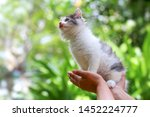 Stock photo beautiful kitten on the palm asian woman is stroking a small kitten 1452224777