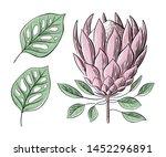 vector set of floral elements ... | Shutterstock .eps vector #1452296891
