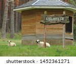 biblioteca. library and sheep... | Shutterstock . vector #1452361271