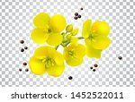 Canola seeds and flowers realistic set, Rape oil. Brassica napus. Seamless vector pattern. Isolated vector illustration on white background.