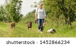 Stock photo dog sitter walks with many dogs on a leash dog walker with different dog breeds in the beautiful 1452866234