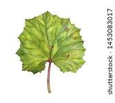 watercolor drawing green leaf... | Shutterstock . vector #1453083017