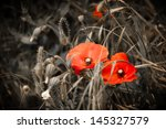 Two Red Poppies And Wild...