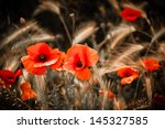 Red Poppies And Wheat Spikes....