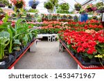 Colorful Flowers And Plants For ...
