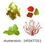 coral seaweed underwater marine ... | Shutterstock .eps vector #1453677311