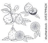 Hand Drawn Bergamot And Tea...