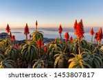 Flowers On Table Mountain At...
