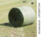 Small photo of Four compressed rounded silage bales bounded in a round bale net on a green meadow. The silage bales are lying between traces of the baler with focus on one round bale in the front of the picture.