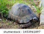 Stock photo tortoise in calis beach fethiye turkey 1453961897