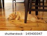 Adorable Labrador Puppy Lying...