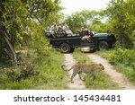 leopard  panthera pardus ... | Shutterstock . vector #145434481