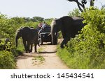 two elephants crossing dirt... | Shutterstock . vector #145434541
