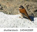 andean bird in altiplano ... | Shutterstock . vector #145442089