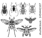 beetles isolated on white... | Shutterstock . vector #1454442107