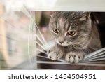 Cute Tabby Cat Looking Outside...