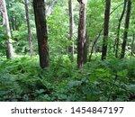 Brunet Island State Park, Wisconsin, June 2016, Forest