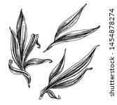 set of beautiful long leaves....   Shutterstock .eps vector #1454878274