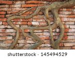 old brick wall and tree roots | Shutterstock . vector #145494529