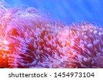 The Amazing Diversity Of Sea...