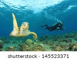 hawksbill sea turtle and scuba... | Shutterstock . vector #145523371