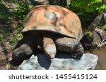 Stock photo the aldabra giant tortoise aldabrachelys gigantea from the islands of the aldabra atoll in the 1455415124