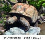 Stock photo the aldabra giant tortoise aldabrachelys gigantea from the islands of the aldabra atoll in the 1455415127