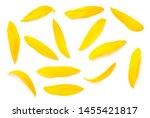 Stock photo sunflower petals isolated on white background top view flat lay 1455421817