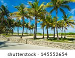 Coconut Palm Trees Along The...