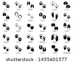 Animals Footprints. Animal Feet ...