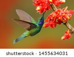 Hummingbird With Red Bloom In...
