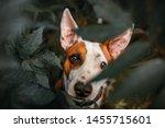 Stock photo  portrait of dog dog sitting 1455715601