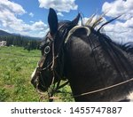 View of horse's head on trail ride in the Teton National forest near Jackson Wyoming