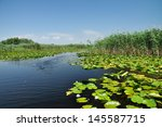 swamp vegetation in the danube... | Shutterstock . vector #145587715