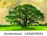A Single Sprawling Tree  A...