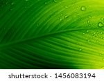 Fresh Green Leaf Backlit By Th...