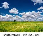 Fields Of Wheat In Spring In...