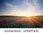 field with grass  violet... | Shutterstock . vector #145657631