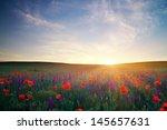 field with grass  violet...   Shutterstock . vector #145657631