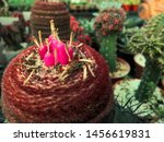 Cactus And Pink Seed Pods