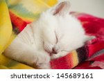 Stock photo sleeping kitten 145689161
